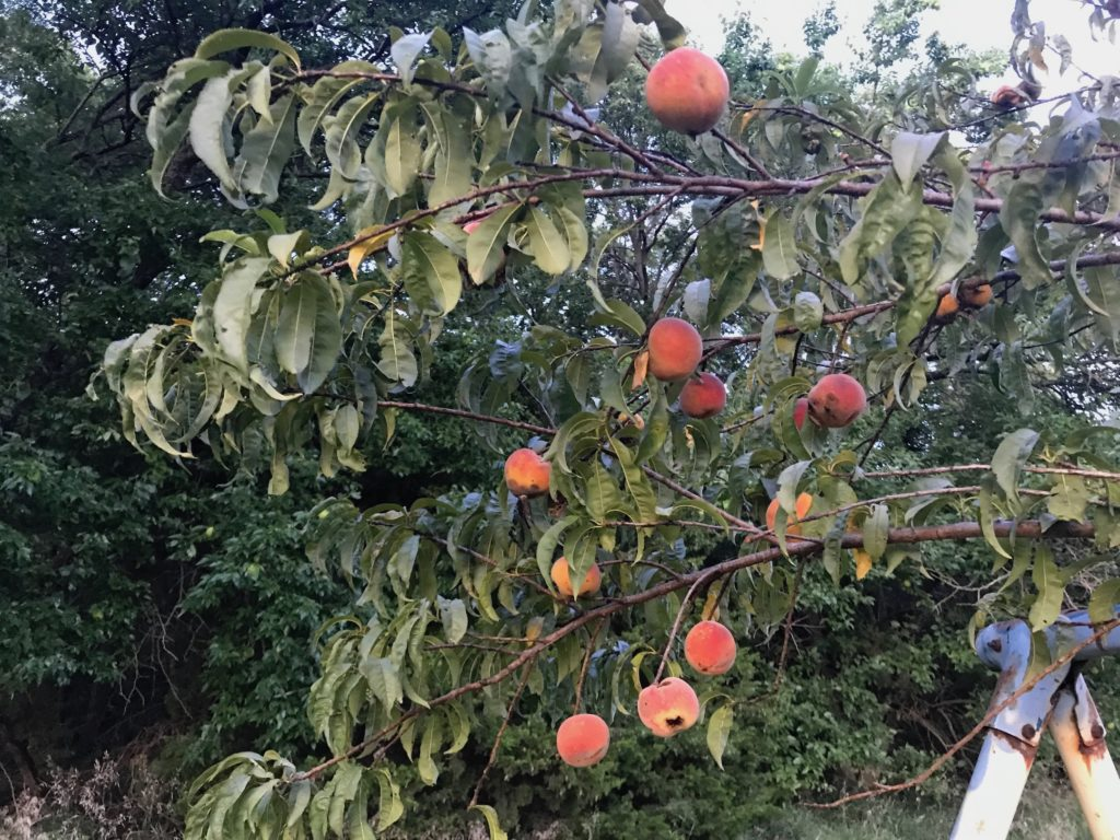 A Quiet Summer Evening With a Side of Peaches: Everyday Magic, Day 982