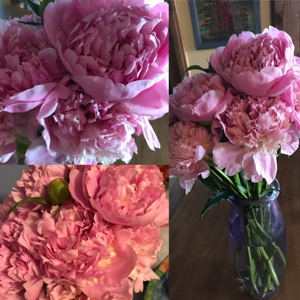 The Peonies Where a Tornado, Cancer Diagnosis, and Pandemic Meet: Everyday Magic, Day 1007