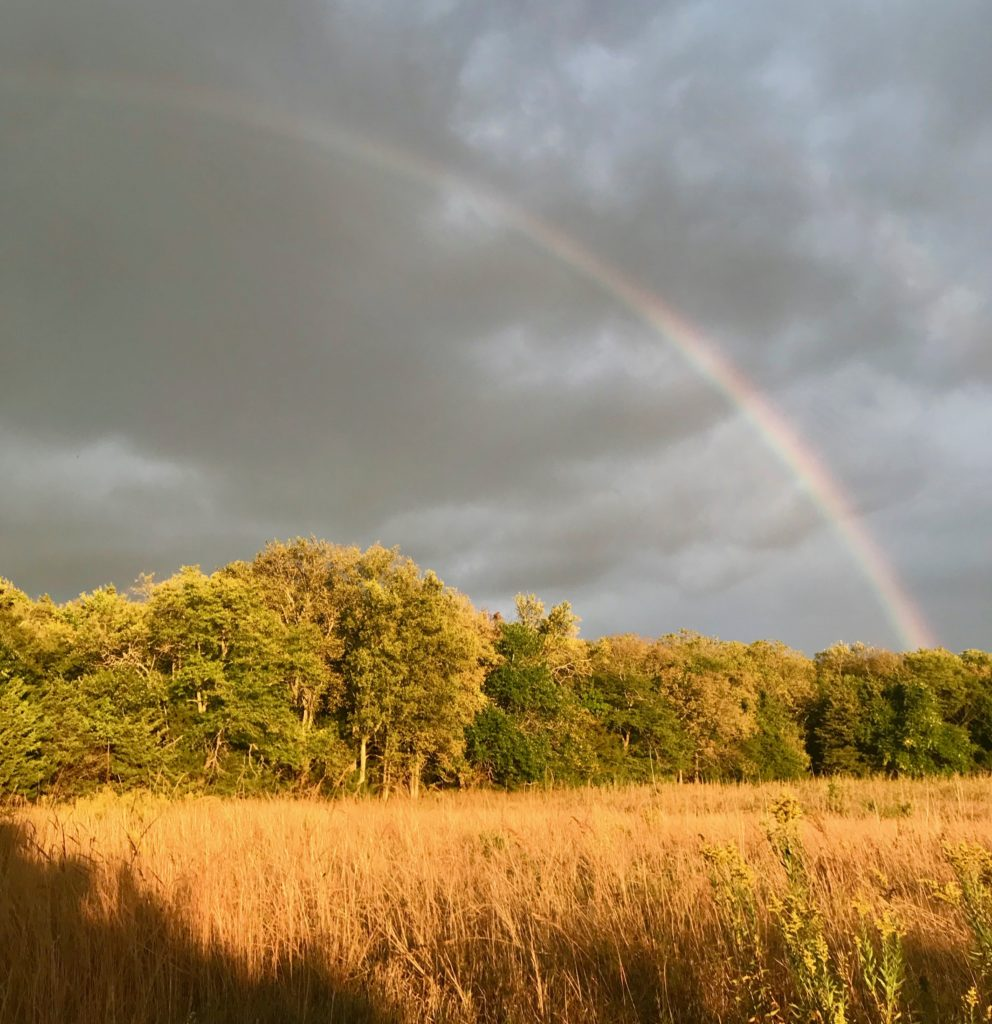 Make Mine an MRI With a Side of Enya and a Rainbow for Dessert: Everyday Magic, Day 1060